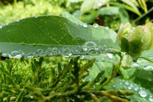 Raindrops, Foliage