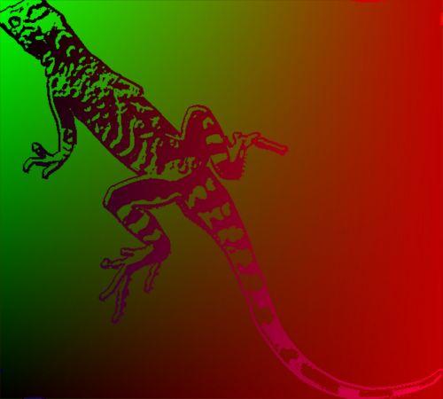 Gradient Salamander
