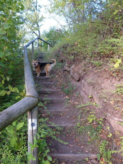 gradually stairs emergence