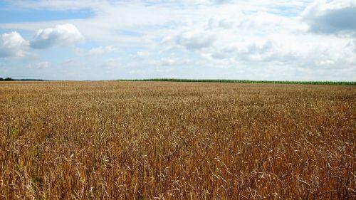 grain country green
