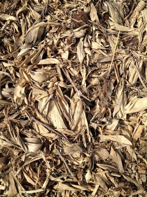 grain corn stalks hay