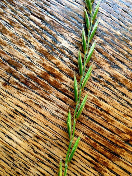 grain art food