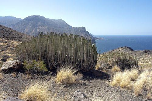 gran canaria  euphorbia  landscape