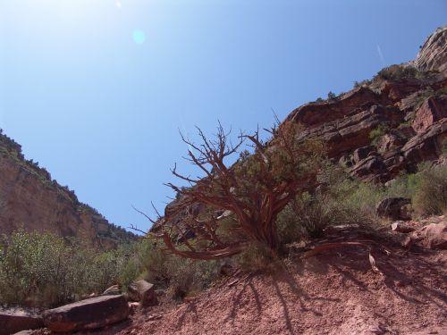 Didysis kanjonas,Gorge,medis,Arizona,usa,gamta,Nacionalinis parkas,vaizdas,platus,slėnis,lankytinos vietos,didžiojo kanjono nacionalinis parkas,Rokas,ledge