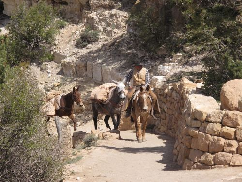grand canyon mule guide