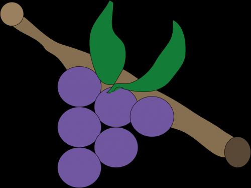 grape lila purple