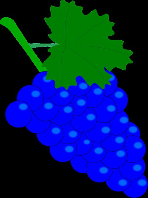 grape vintage wine