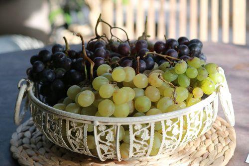 grape fruit nature