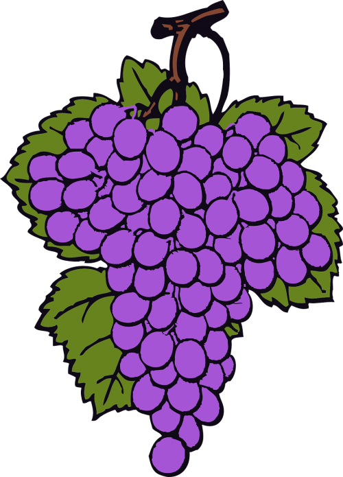 grape bunch cluster