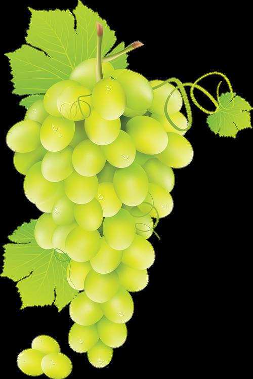 grape  fruit  green grape