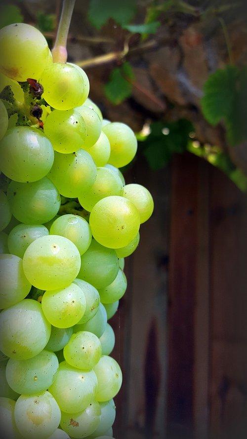 grape  cluster  white grape