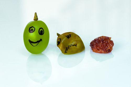 grape raisin aging