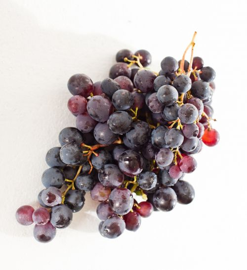 grape winegrowing vine