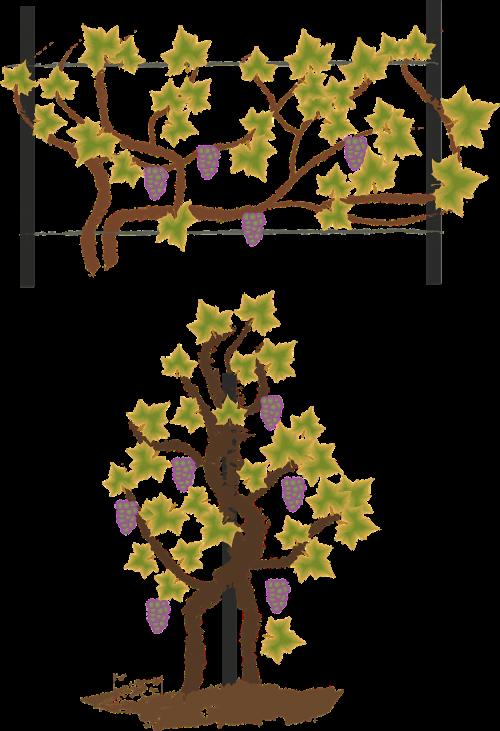 bower plantation stake