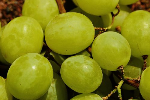 grapes fruit table grapes