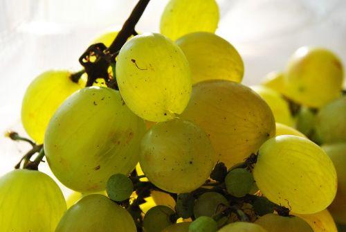 grapes berry light