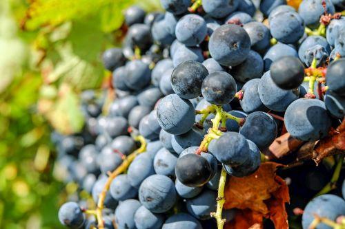 grapes fruit blue
