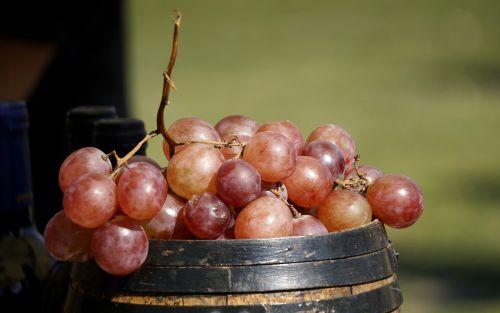 grapes vine cluster