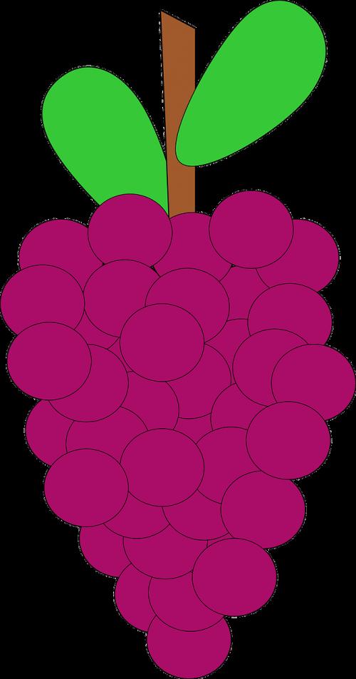 grapes bunch ripe