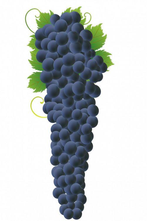 grapes grape bunch