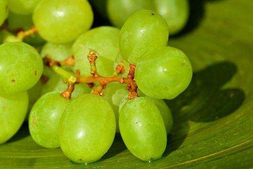 grapes fruits healthy