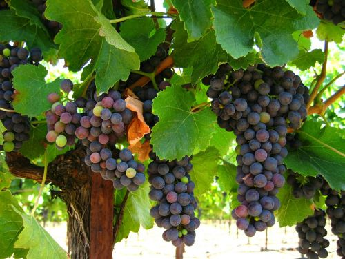 grapes fruit nature