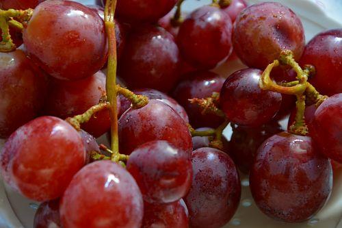 grapes vine clusters