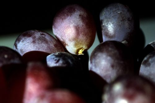 grapes violet fruit