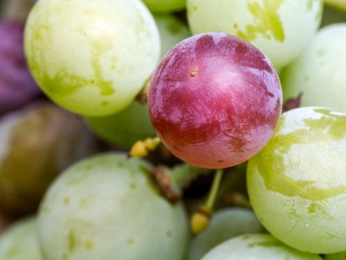 grapes fruit red