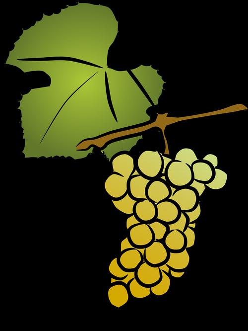 grapevine  white wine  viticulture