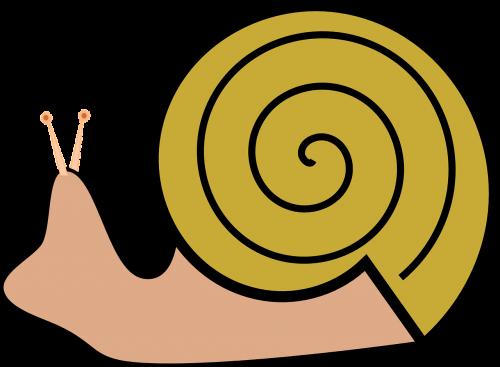 grapevine snail slug snail