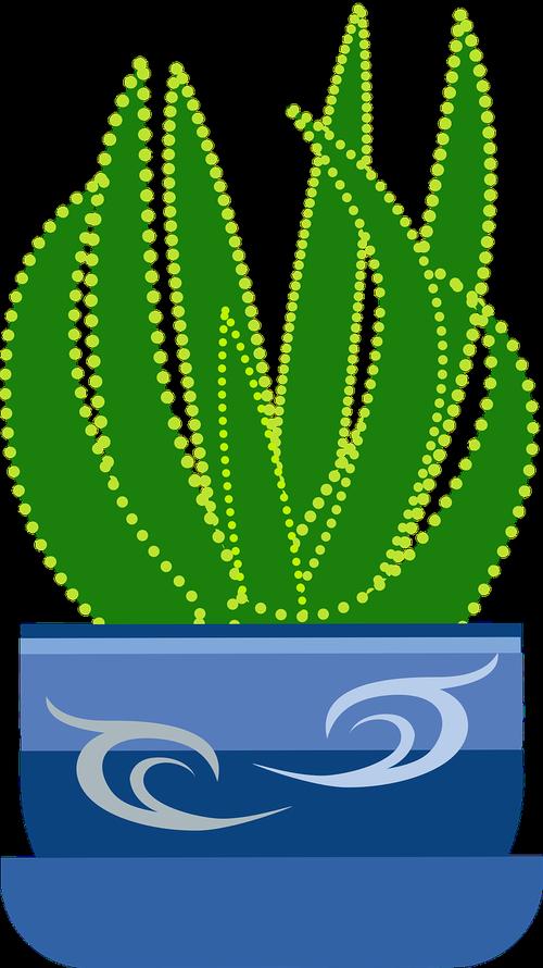 graphic  aloe  plant