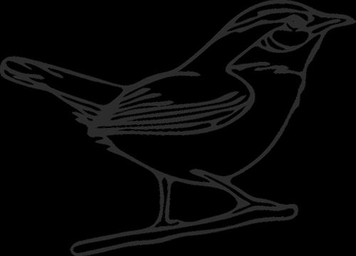graphic  mockingbird  northern mockingbird