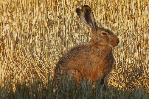 graphic  photo painting  hare