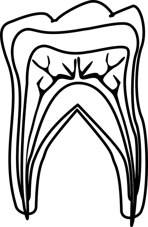 graphic  molar diagram  molar