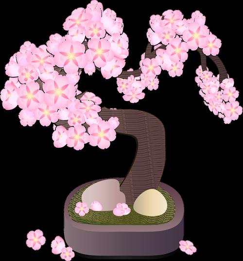 graphic  bonsai tree  bonsai