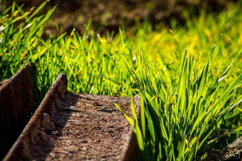 grass green yellow