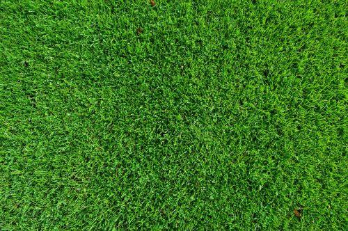 grass turf lawn