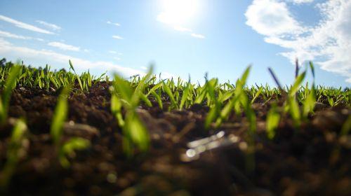 grass garden green