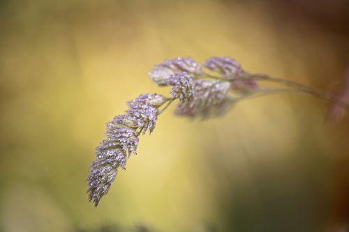 grass blade of grass nature