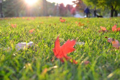 grass lawn meadow