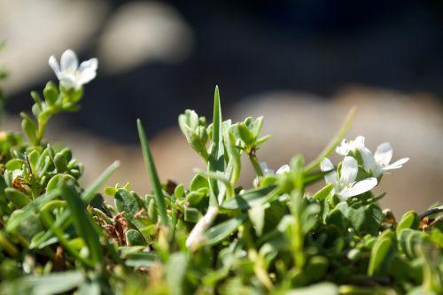 grass flower green