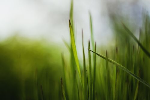 grass plant plants