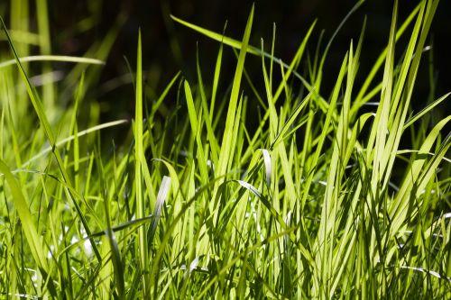 grass green frisch