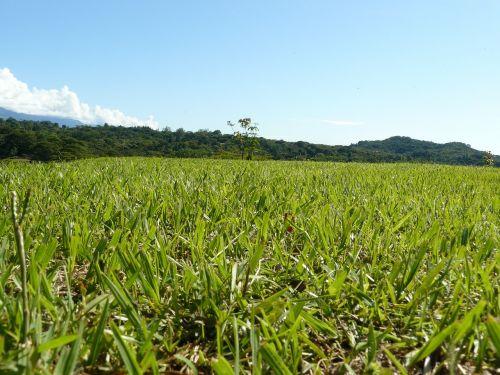 grass valley vegetable
