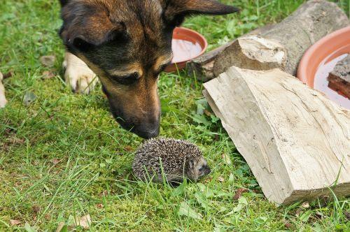 grass garden hedgehog