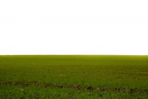 žolė, veja, priekinė & nbsp, arba & nbsp, atgal & nbsp, kiemas, aukštas & nbsp, kampas & nbsp, peržiūra, laukas, žaisti & nbsp, lauką, tekstūruotas & nbsp, poveikis, visuomeninis & nbsp, parkas, fonas, žalia spalva, tiesiogiai & nbsp, aukščiau, pieva, ganykla, diena, lauke, Iš arti, gamta, augalas, žolė