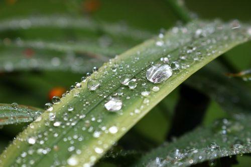 grass dew nature
