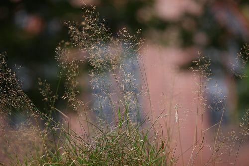 grass soft diffuse