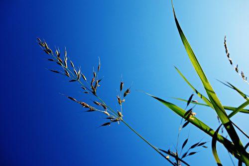 grass halm stem